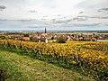 Kintzheim et son vignoble, vus de la route du Haut-Koenigsbourg. (2).jpg