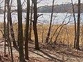 Koenigswald - Lehnitzseeufer (Lehnitz Lakeshore) - geo.hlipp.de - 34708.jpg