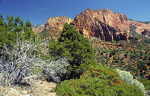 Kolob Canyons part of Zion National Park.JPG