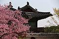 Korea Palace Spring Flowers 12.jpg