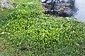 Koshi Tappu Wildlife Reserve (3).jpg