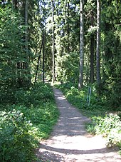 Photograph of a dirt trail through a forest