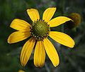 Kwiat 719.jpg