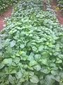 Légumes(zom).jpg