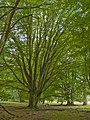 Lüneburger Heide - Hutewald 001.jpg