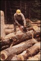 LUMBERJACK FROM TUPPER LAKE CUTTING LOGS INTO EIGHT FOOT SECTIONS FOR LOADING. HE IS WORKING ON INTERNATIONAL PAPER... - NARA - 554415.tif