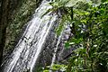 La Coca Falls, El Yunque National Forest.jpg