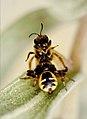 La araña y su presa 01 - The spider and its prey (4530472645).jpg