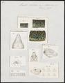 Lacerta ocellata - kop, poten en schubben - 1700-1880 - Print - Iconographia Zoologica - Special Collections University of Amsterdam - UBA01 IZ12400093.tif