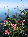 Lake Michigan from Port Washington bluffs 7.JPG