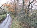 Lane and beechwood - geograph.org.uk - 623450.jpg