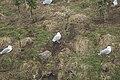 Larus argentatus-5018.jpg