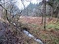 Laymoor Quag - March 2013 - panoramio (1).jpg