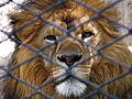 León, Mendoza Zoo.JPG