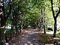 Leśmierz, park przyfabryczny-009.JPG