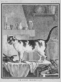 Le Chat domestique - Domestic Cat - Felis silvestris catus - Gallica - ark 12148-btv1b2300253d-f4.png