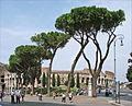 Le Colisée (Rome) (5982795970).jpg