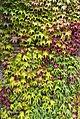 Leaves (8349054428).jpg