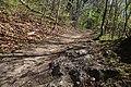 Leitenwälder der Isar 0655.jpg