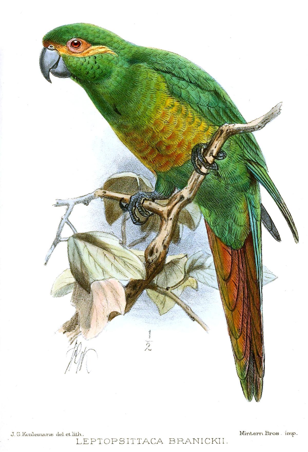 Зелёный попугай цвет
