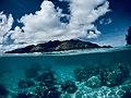Les coraux de Moorea.jpg