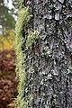 Lichen (15274326110).jpg
