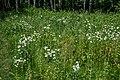 Liebiadziny reserve (Belarus) 13.jpg
