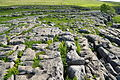 Limestone pavement above Malham Cove (5832).jpg