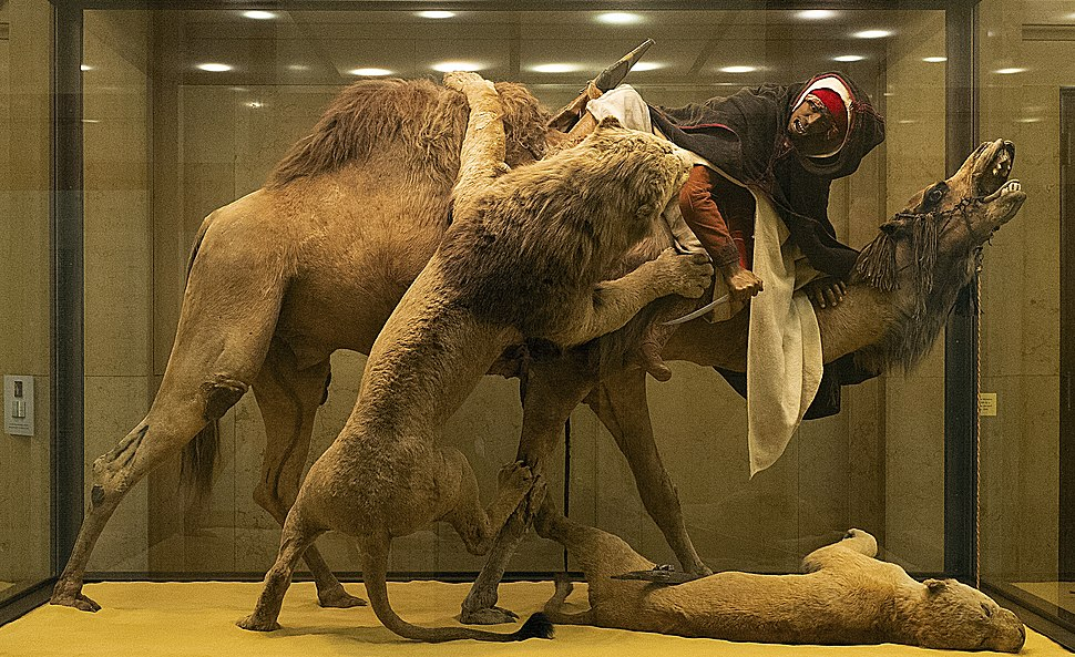 Lion Attacking a Dromedary full
