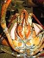Lobster 11.jpg