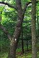 Local Hike (3) (9698479396).jpg