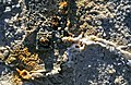 Los Ojos del Salar de Uyuni 05.jpg