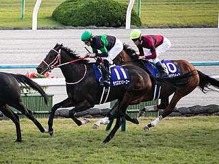 Loves Only You Japanese Thoroughbred racehorse