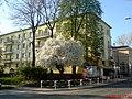 Lublin - Na ulicy Łopacińskiego - panoramio.jpg