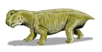 Permian–Triassic extinction event -  Lystrosaurus was by far the most abundant early Triassic land vertebrate.