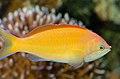 M's Aquarium 17.jpg
