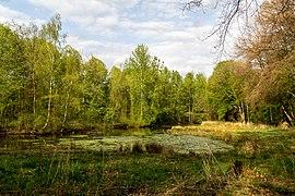 Münster, Wolbeck, Wolbecker Tiergarten, Naturwaldzelle -Teppes Viertel- -- 2014 -- 7085.jpg