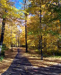 MSU's campus is heavily forested. This trail runs behind several residence halls, including Owen Hall, McDonel Hall, and Holmes Hall.