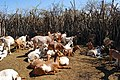 Maasai 2012 05 31 2814 (7522640642).jpg