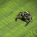 Macro Spider (1 of 1) (14018505678).jpg