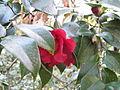 Magnolia Plantation and Gardens - Charleston, South Carolina (8556494774).jpg