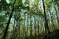 Malayattoor - teak plantation.jpg