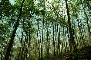 Malayattoor - A teak plantation at Malayattoor