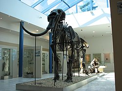 Mammoth skeleton 01.JPG