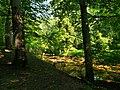 Manalapan Brook Thompson Park.jpg