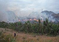Égő madagaszkári esőerdő