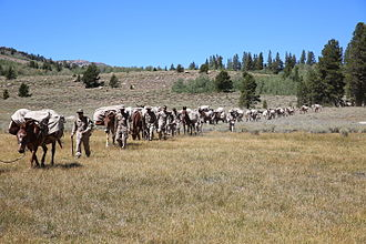 Pack animal -  US Marines training in resupply with pack horses. Bridgeport, California, 2014