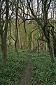 Marriott's Spinney near Old Dalby - geograph.org.uk - 159692.jpg