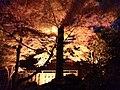 Maruyama Park - panoramio (1).jpg
