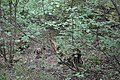 Mežs, Skrundas pagasts, Skrundas novads, Latvia - panoramio.jpg